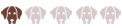 Бигль харьер: описание породы, характеристика, фото, Все о собаках