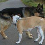 Почему собаки нюхают друг у друга под хвостом?