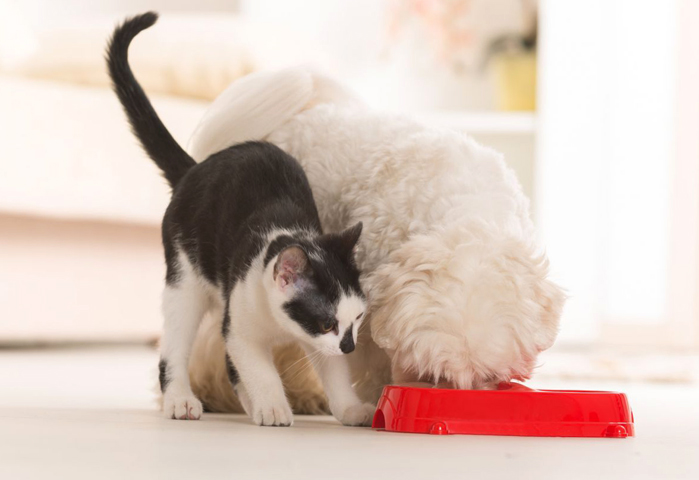Собака и кошка кушают