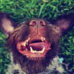 Почему у собаки пахнет тухлятиной изо рта и что делать