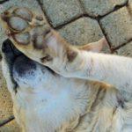 Почему собаки дергают лапой, когда их чешешь?