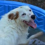 Кокцидиоз у собак: симптомы и лечение
