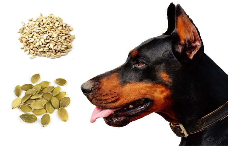 Семечки для собаки