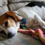Колит у собаки: признаки, симптомы и лечение