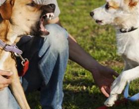 Как отучить собаку лаять на других собак
