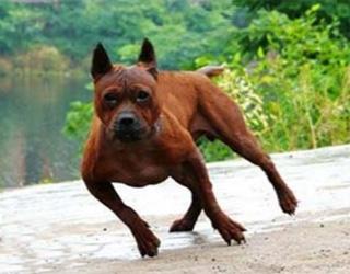 Чунцин бежит