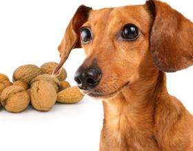 Орехи для собак