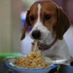 Макароны собакам: можно ли давать, польза и вред