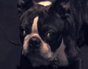 Собака закатывает глаза