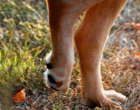 умеренный синовит коленного сустава симптомы лечение