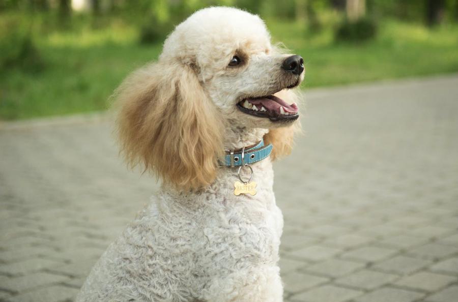собак фото размерам по с породы