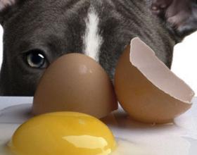 Можно ли давать яйца собаке