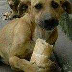 Можно ли давать собакам хлеб и сухари