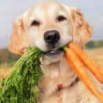 Можно ли собаке давать морковь: польза и вред