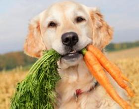 Можно ли собаке давать морковь