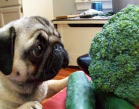 Можно ли давать брокколи собакам