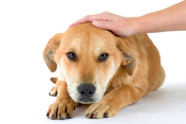 Признак дисбактериоза у собаки