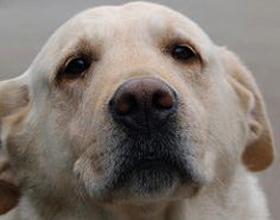 Гепатоз у собак