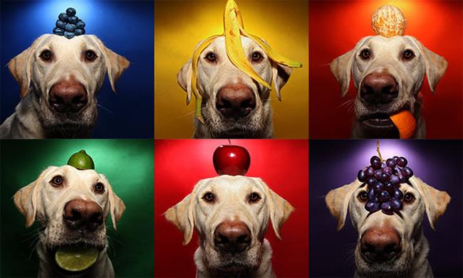 Собака с фруктами