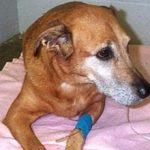 Гастроэнтерит у собак: признаки, симптомы и лечение