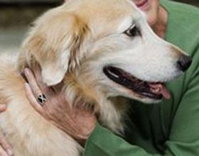 Холестаз у собак