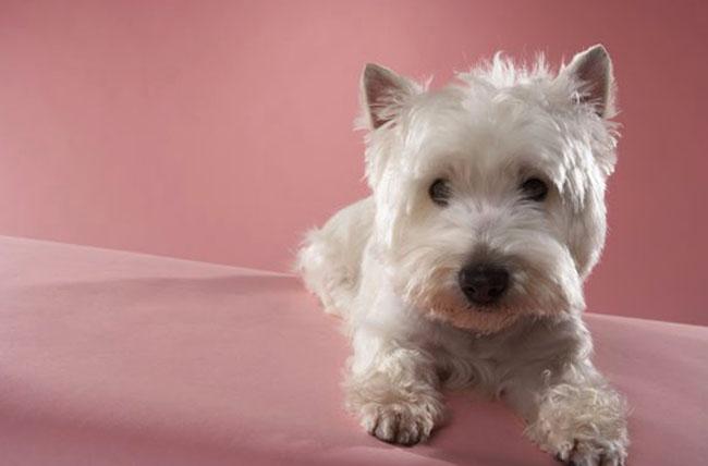 Холестаз у собаки