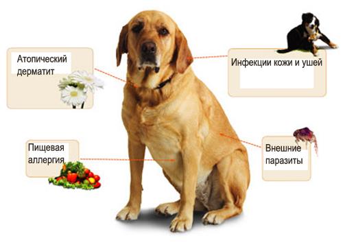 аллергия у щенков лечение