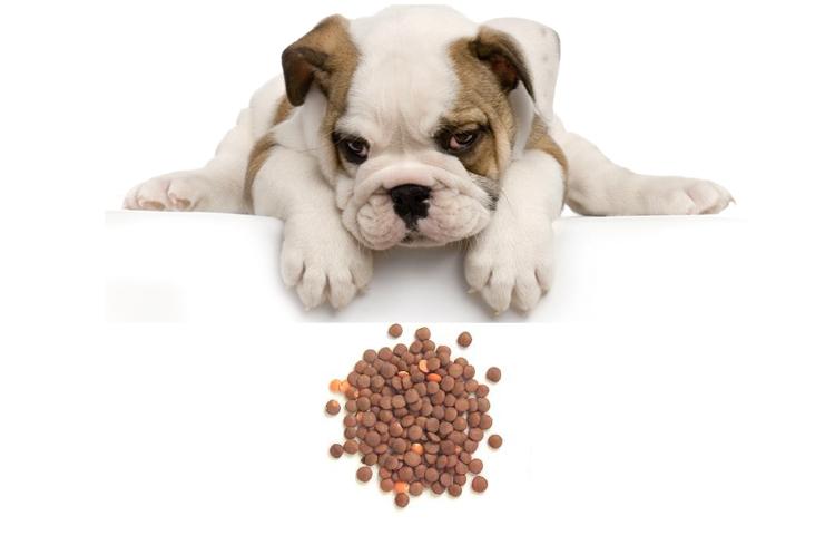 Собака и чечевица