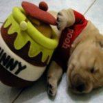 Мед собаке: можно ли давать и сколько давать