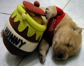 Мед собаке