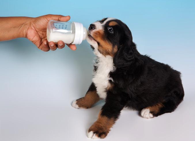Молоко собаке