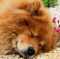 Евразиер спит