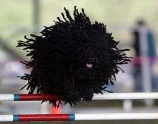 Черный Пули
