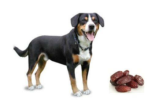 Финик для собаки
