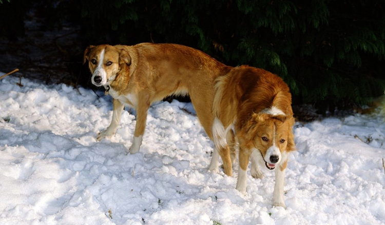 2 собаки после спаривания