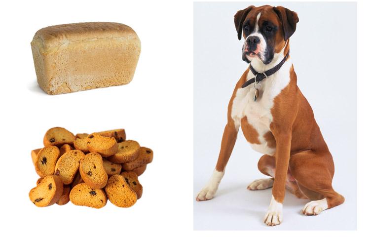 Собака с сухарями и хлебом