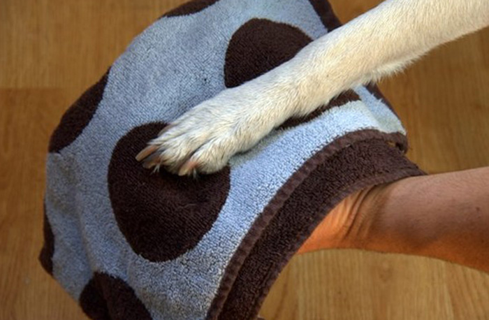 Протирание лапы собаке