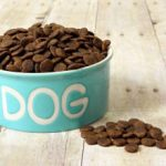 Как правильно переводить собаку на сухой корм и стоит ли это делать
