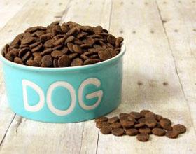 Как правильно переводить собаку на сухой корм