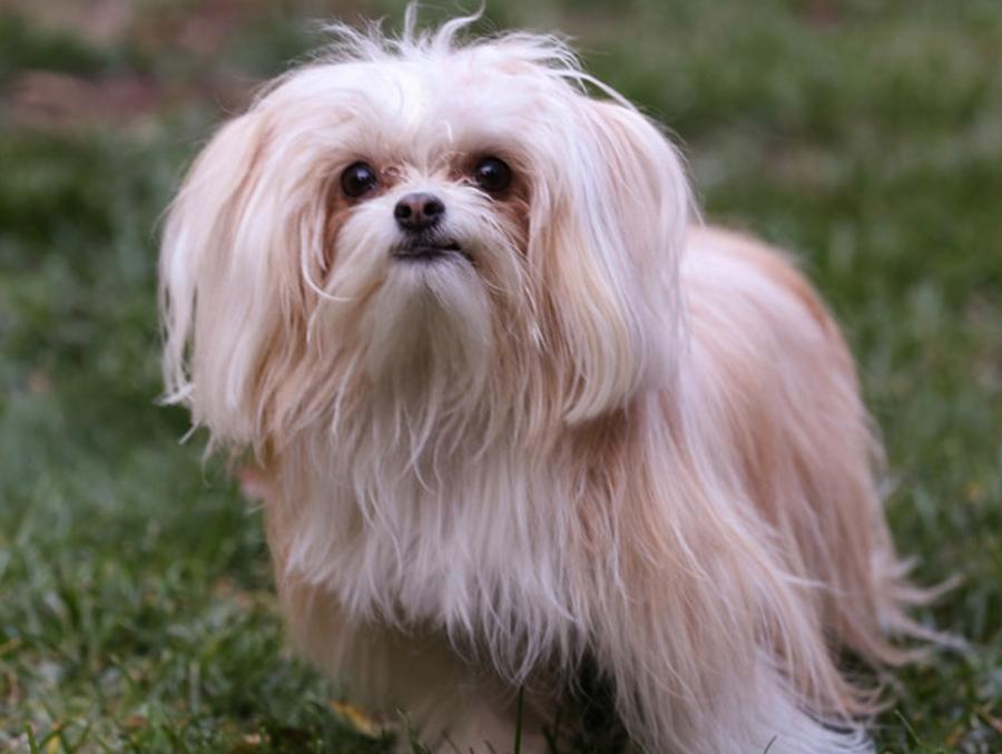 ссылки: стоит ми-ки собака купить в санкт-петербурге квартиру без посредников