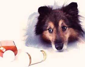 Антибиотки для собак