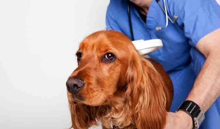 Диагностика гастрита у собаки