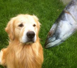 Собаке предлагают рыбу