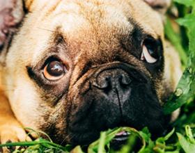 Какую траву можно давать собакам