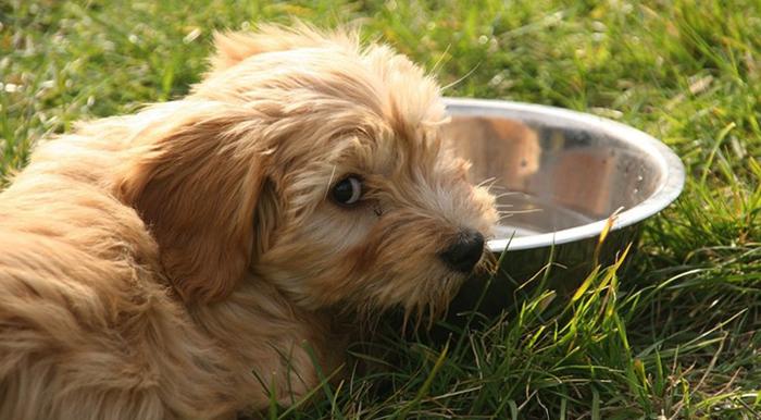 Собака и вода
