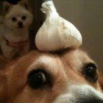Можно ли давать лук собаке