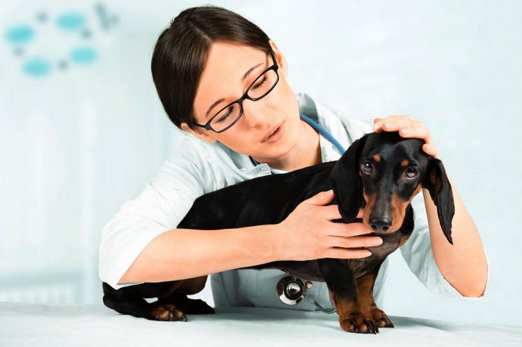 Собака с отеком легких у ветеринара