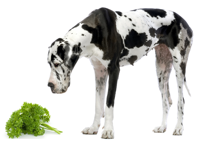 Собака и петрушка