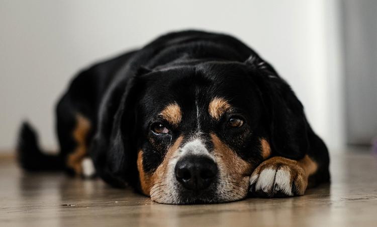 Собака после лука