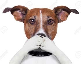 Если собака перестала лаять